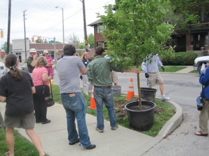 Streetscape Planting