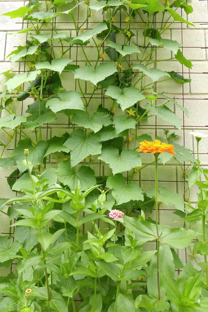 ICAN Garden